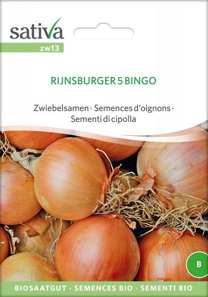 Zwiebel Rijnsburger 5 Bingo