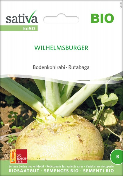 Bodenkohlrabi Wilhelmsburger