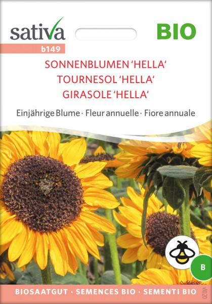 Sonnenblume Hella