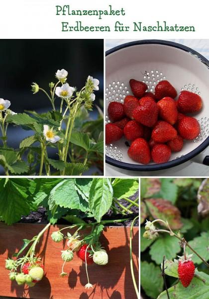 Erdbeeren für Naschfreunde - 6 Pflanzen