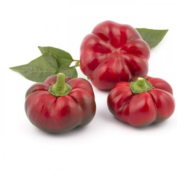 Gemüsepaprika 'Paradeisfruchtiger Frühroter'