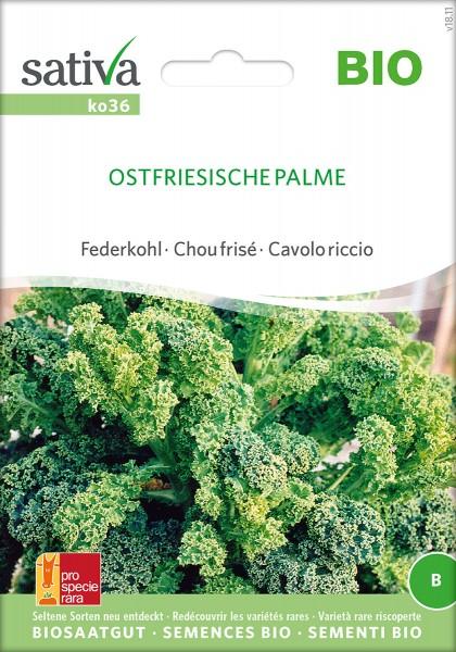 Federkohl Ostfriesische Palme